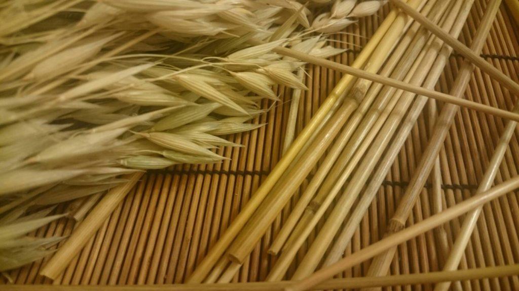 オーツ麦穂とライ麦穂の茎のセット